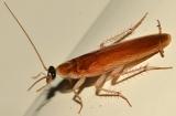 Эффективные методы борьбы с тараканами
